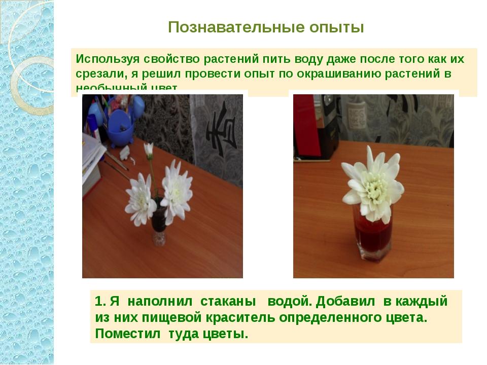 Познавательные опыты Используя свойство растений пить воду даже после того ка...