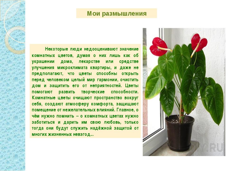 Картинки комнатных растений с названиями и кратким описанием выборе
