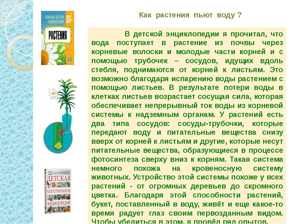 Как растения пьют воду ? В детской энциклопедии я прочитал, что вода поступае...