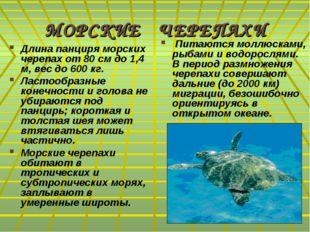 МОРСКИЕ ЧЕРЕПАХИ Длина панциря морских черепах от 80 см до 1,4 м, вес до 600