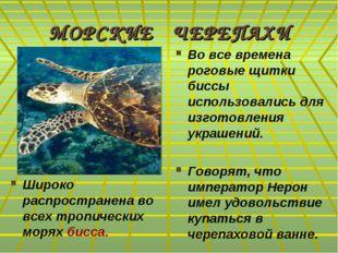 МОРСКИЕ ЧЕРЕПАХИ Широко распространена во всех тропических морях бисса. Во вс