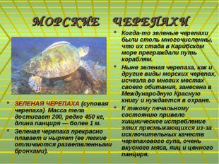 МОРСКИЕ ЧЕРЕПАХИ ЗЕЛЕНАЯ ЧЕРЕПАХА (суповая черепаха) Масса тела достигает 200