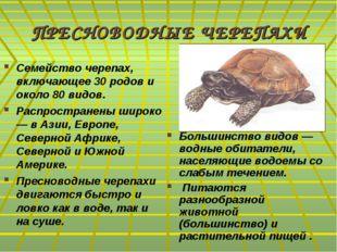 ПРЕСНОВОДНЫЕ ЧЕРЕПАХИ Семейство черепах, включающее 30 родов и около 80 видов