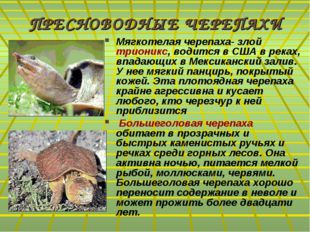 ПРЕСНОВОДНЫЕ ЧЕРЕПАХИ Мягкотелая черепаха- злой трионикс, водится в США в рек