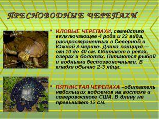 ПРЕСНОВОДНЫЕ ЧЕРЕПАХИ ИЛОВЫЕ ЧЕРЕПАХИ, семейство вклключающее 4 рода и 22 вид