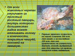 От всех животных черепах отличает их толстый костный панцирь, внутрь которого
