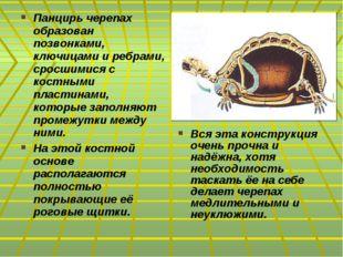 Панцирь черепах образован позвонками, ключицами и ребрами, сросшимися с костн