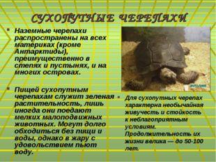 СУХОПУТНЫЕ ЧЕРЕПАХИ Наземные черепахи распространены на всех материках (кроме