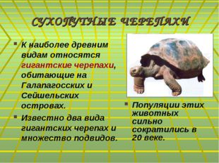 СУХОПУТНЫЕ ЧЕРЕПАХИ К наиболее древним видам относятся гигантские черепахи, о
