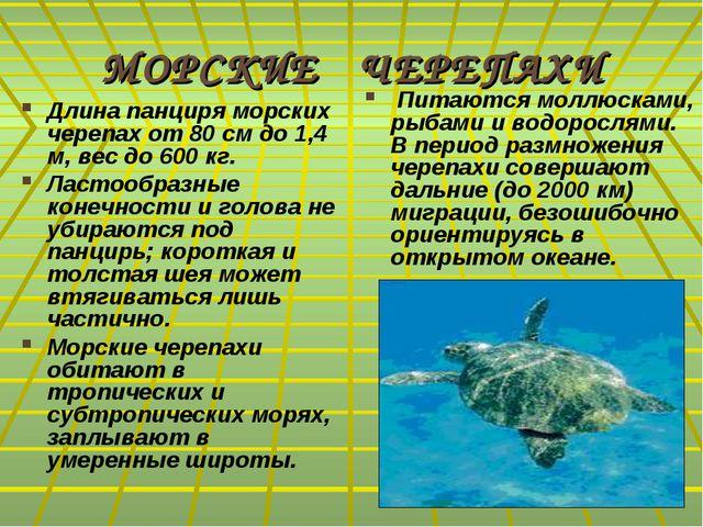 МОРСКИЕ ЧЕРЕПАХИ Длина панциря морских черепах от 80 см до 1,4 м, вес до 600...