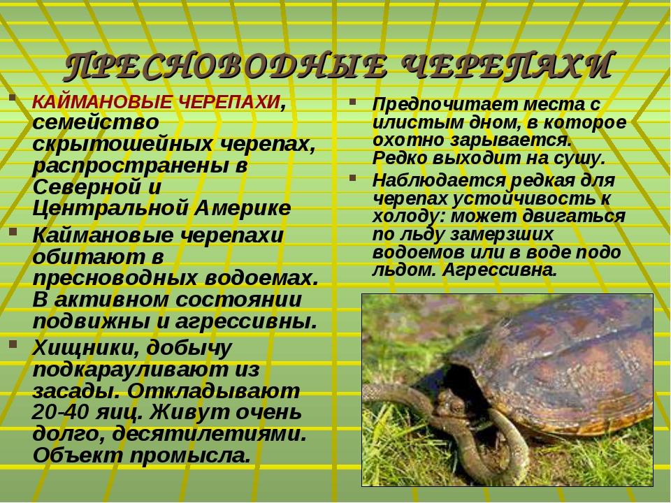 ПРЕСНОВОДНЫЕ ЧЕРЕПАХИ КАЙМАНОВЫЕ ЧЕРЕПАХИ, семейство скрытошейных черепах, ра...