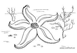 Картинки по запросу рисунок морская звезда
