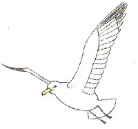 Как нарисовать чайку. . Версия для печати