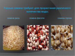 Разные семена требуют для прорастания различного количества воды. семена рис