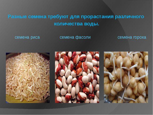 Разные семена требуют для прорастания различного количества воды. семена рис...