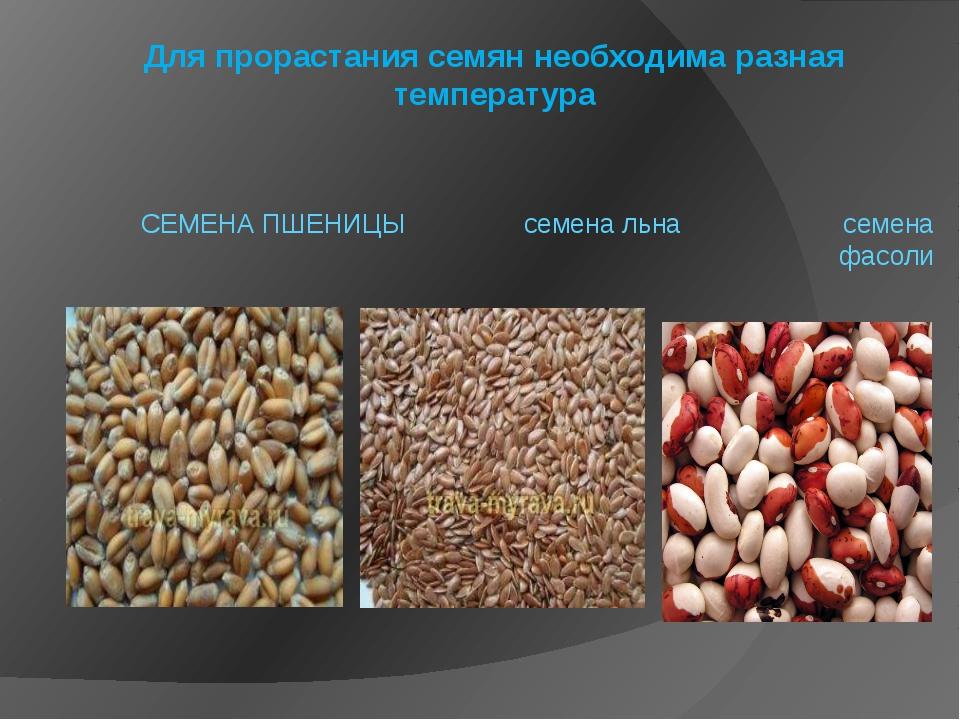 Для прорастания семян необходима разная температура СЕМЕНА ПШЕНИЦЫ семена льн...