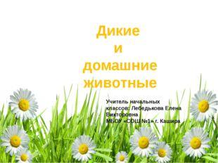 Дикие и домашние животные Учитель начальных классов: Лебедькова Елена Викторо