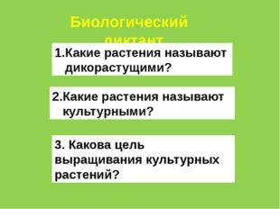 Биологический диктант Какие растения называют дикорастущими? 2.Какие растения