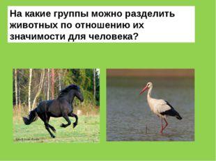 На какие группы можно разделить животных по отношению их значимости для челов