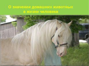 О значении домашних животных в жизни человека