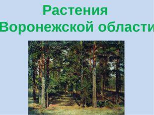 Растения Воронежской области