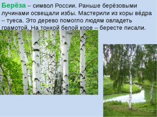 Берёза – символ России. Раньше берёзовыми лучинами освещали избы. Мастерили и