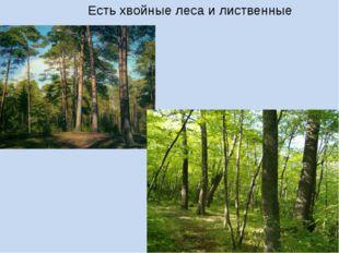 Есть хвойные леса и лиственные