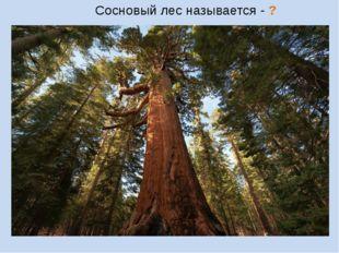 Сосновый лес называется - ?