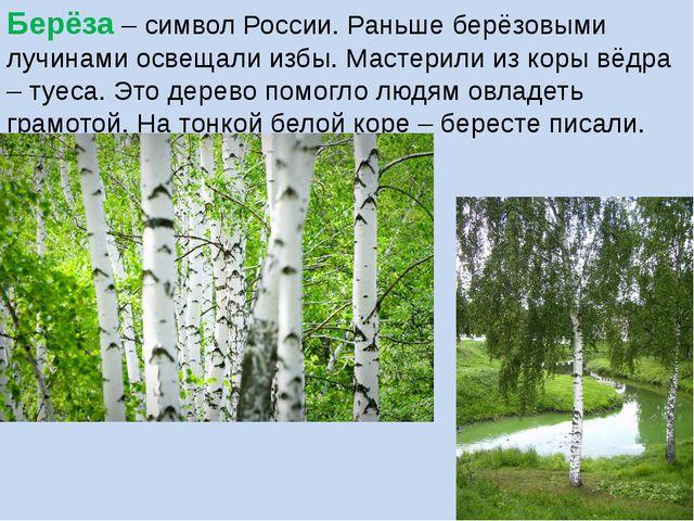Берёза – символ России. Раньше берёзовыми лучинами освещали избы. Мастерили и...