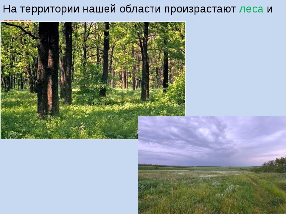 На территории нашей области произрастают леса и степи