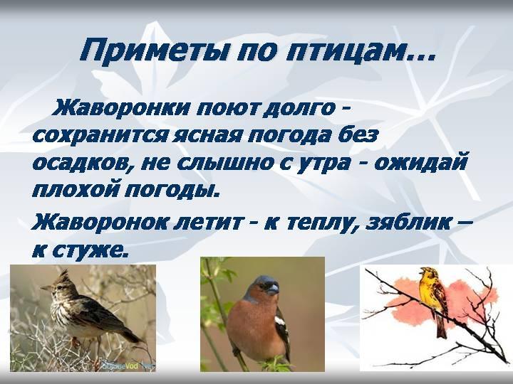 hello_html_m6eb8504.jpg