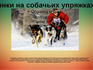 За рубежом, в северных странах гонки на собаках начали проводиться более 100