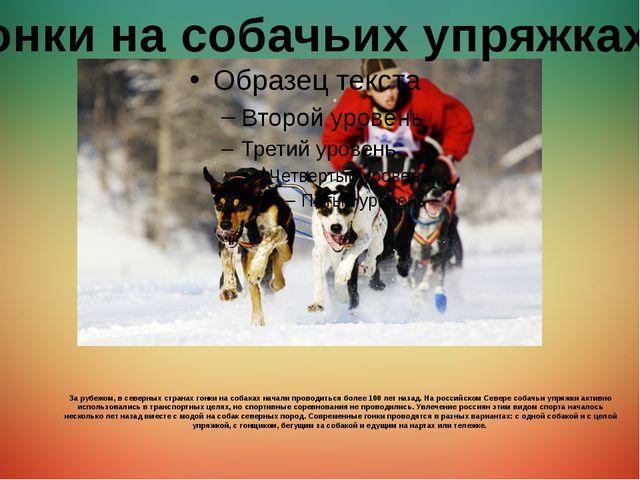За рубежом, в северных странах гонки на собаках начали проводиться более 100...