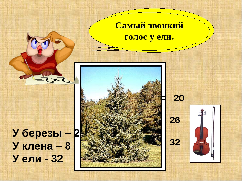 У какого дерева самый звонкий голос? У березы – 27 У клена – 8 У ели - 32 32...