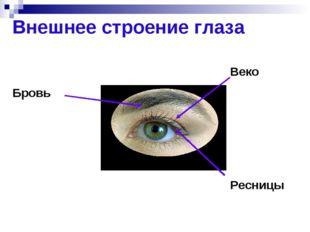 Рассмотрим внешнее строение глаза. Бровь Веко Ресницы Внешнее строение глаза