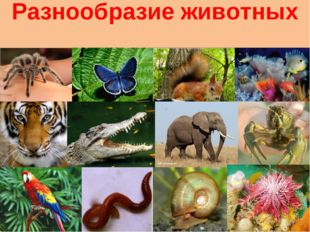 Разнообразие животных