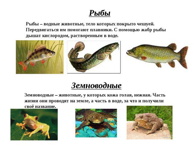Рыбы Рыбы – водные животные, тело которых покрыто чешуей. Передвигаться им по...