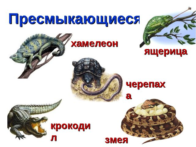 Пресмыкающиеся крокодил хамелеон черепаха змея ящерица