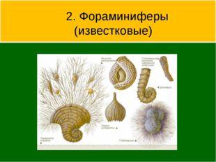 2. Фораминиферы (известковые)