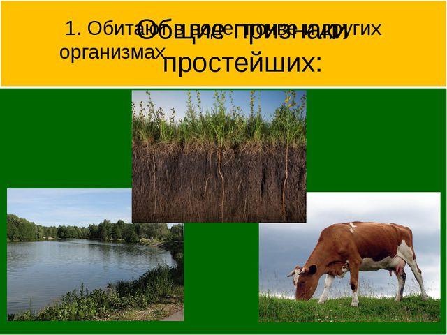 Общие признаки простейших: 1. Обитают в воде, почве и других организмах