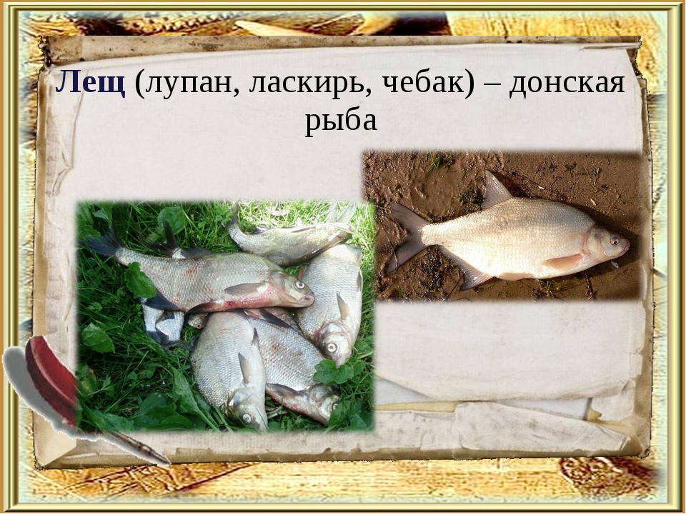 Лещ (лупан, ласкирь, чебак) – донская рыба
