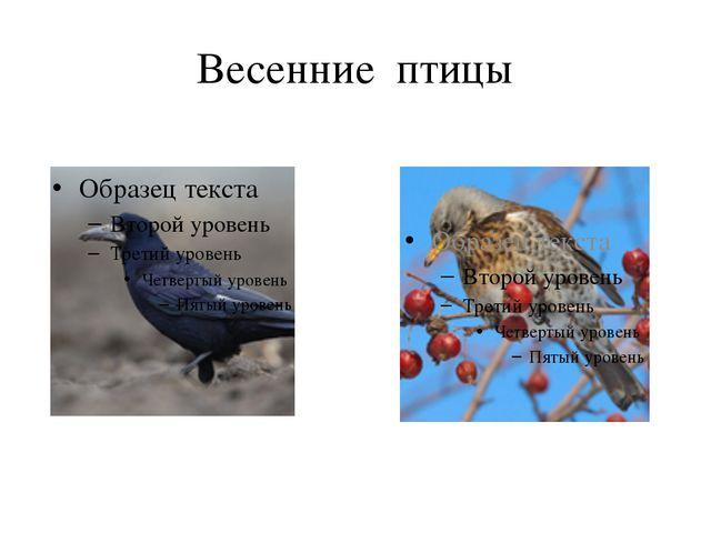 Весенние птицы