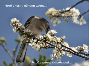 Чтоб вишня, яблоня цвела!.. Чтоб заливался соловей……