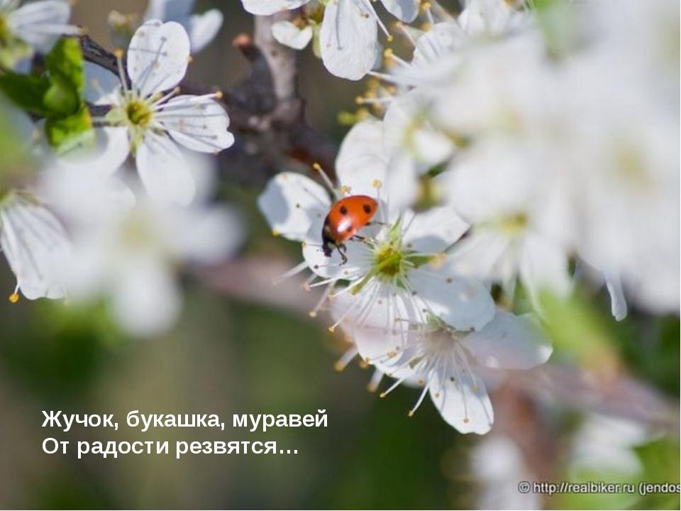 Жучок, букашка, муравей От радости резвятся…