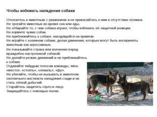 Чтобы избежать нападения собаки Относитесь к животным с уважением и не прикас
