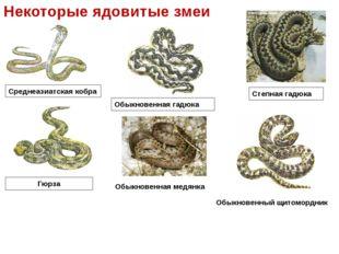 Среднеазиатская кобра Некоторые ядовитые змеи Обыкновенная гадюка Гюрза Степн