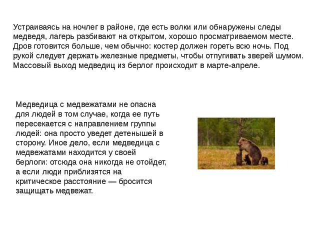Устраиваясь на ночлег в районе, где есть волки или обнаружены следы медведя,...