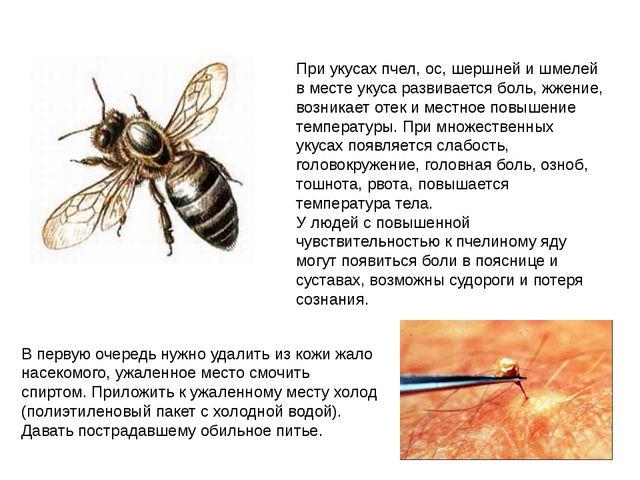 При укусах пчел, ос, шершней и шмелей в месте укуса развивается боль, жжение,...
