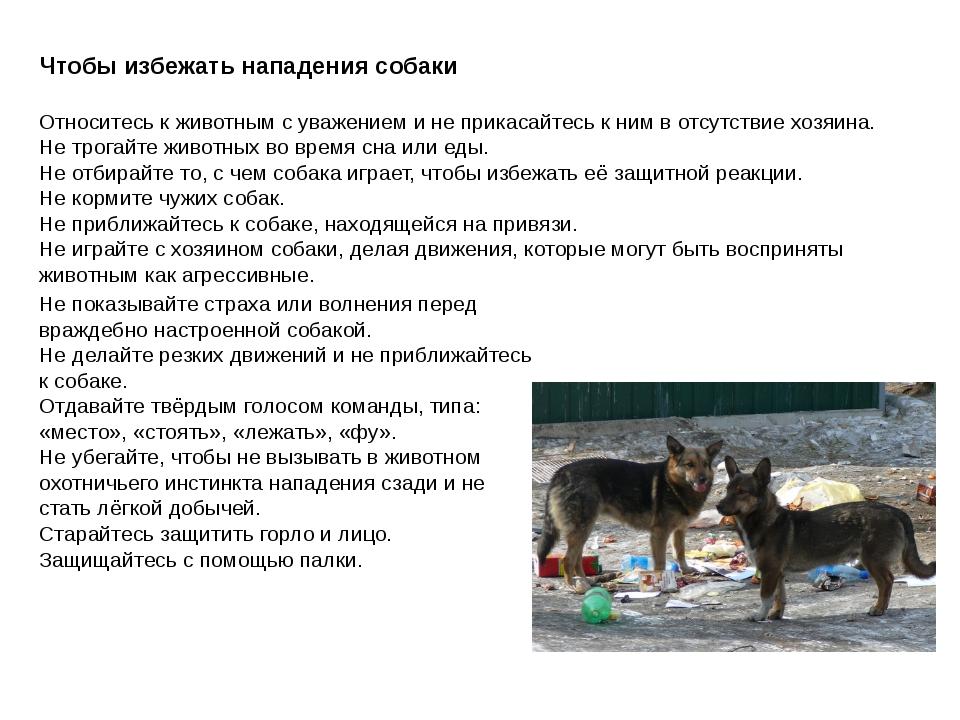 Чтобы избежать нападения собаки Относитесь к животным с уважением и не прикас...