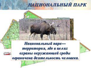 НАЦИОНАЛЬНЫЙ ПАРК Национальный парк— территория, где в целях охраны окружающе